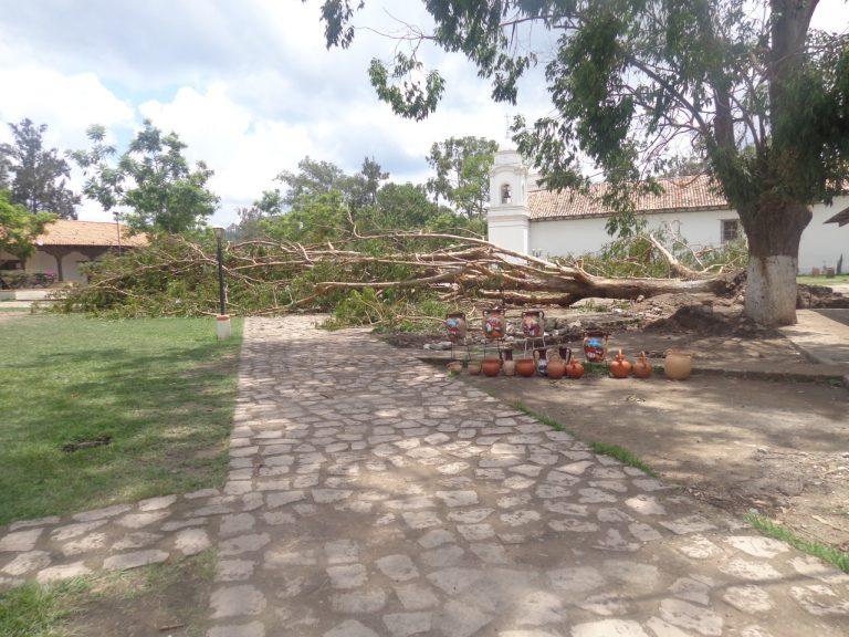 CORTE DE ÁRBOLES EN OJOJONA REQUE. FEMA 1